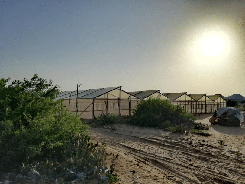 Agrikaab Greenhouse Farm in the middle of Somalia