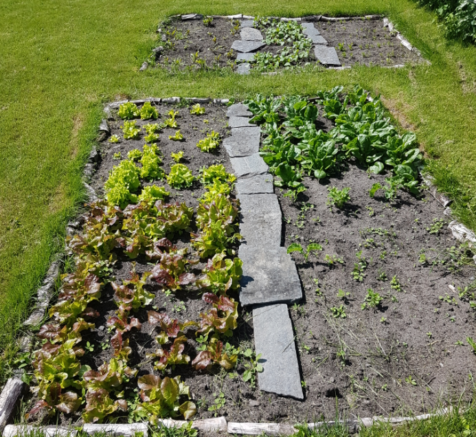 The Working At Home Man's garden vegetable patch